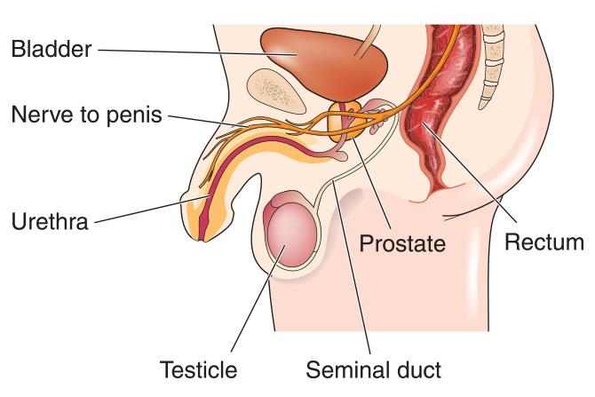 cel mai bun tratament pentru prostatita cronica Élet és prostatitis